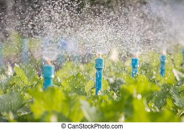 Water sprinkler system working in a vegetable garden.