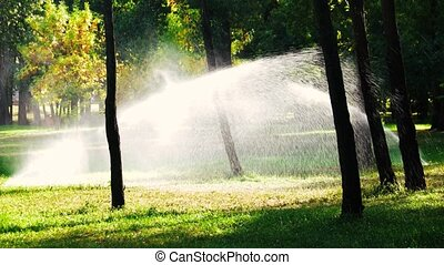 Water sprinkling on the lawn. Sprinkler system in the park.
