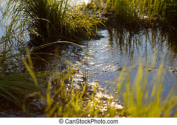 Water stream in a meadow