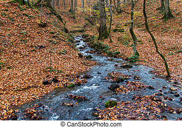 Water Streaming in Forest