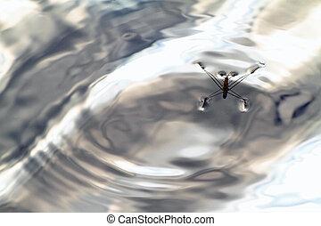 Water strider in a pond