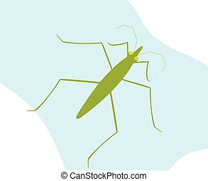 Water Strider Insect Vector Illustration