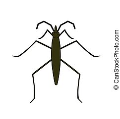 Water Strider Vector Illustration