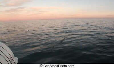 Water surface and birds on background of horizon view from...