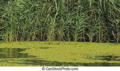 Water surface waving with plants - Calm lake surface with...
