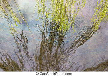 Water surface with tree leaves reaching and reflecting
