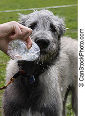 Water the dog.
