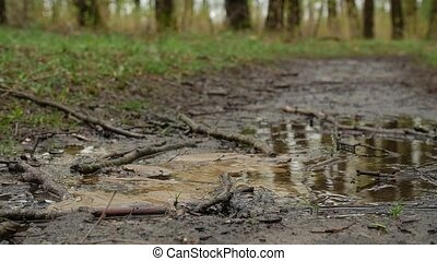 Water torrent in the forest. - Water torrent in the forest...