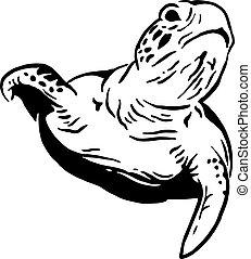 Water tortoise - Silhouette of ocean diving water tortoise