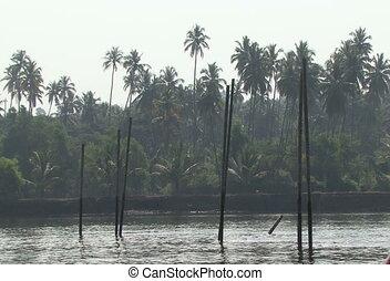 water tree india