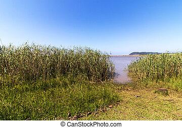 Water Vegetation and Blue Sky Landscape at St Lucia Estuary...