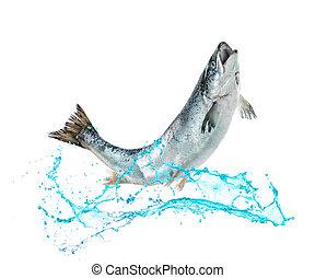 water, visje, springt, salmon, uit