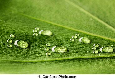 water, voetafdrukken, op, blad