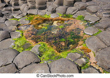 Water with colorful algae between the angular rocks
