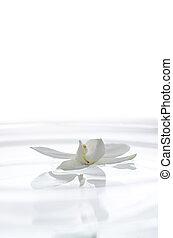 water, witte bloem, orchidee