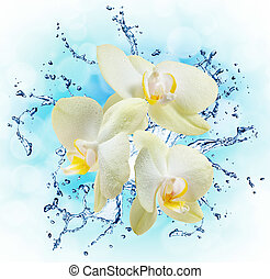water, witte , gespetter, orchids