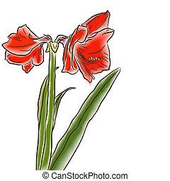 watercolor amaryllis left side - Flower hand drawn amaryllis...