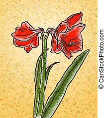 watercolor amaryllis on aged paper - Flower hand drawn...