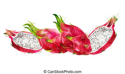 Watercolor appearance animation of the dragon fruit on the...