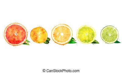 Watercolor appearance animation of the grapefruit, mandarin,...