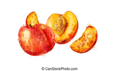 Watercolor appearance animation of the peach on the alpha...