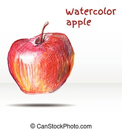 Watercolor apple isolated on white background