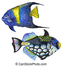 Watercolor aquatic underwater colorful tropical fish set....