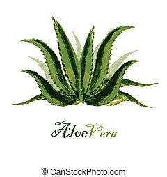 Watercolor background aloe leaves on white, vector