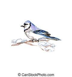 Watercolor Bird Blue Jay, Latin name - Cyanocitta cristata,...