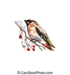 Watercolor Bird European Goldfinch, Latin name - Carduelis...