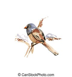 Watercolor Bird - Fringilla coelebs Lat. Common Chaffinch....