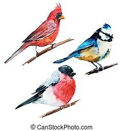 Watercolor birds - Beautiful vector image with nice...