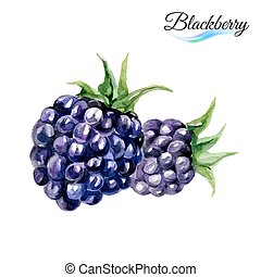 Watercolor blackberry - Watercolor fruit blackberry rose...