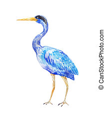 Watercolor blue heron. Illustration of a standing bird