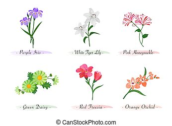 Watercolor botanic garden nature plant flower iris tiger lily honeysuckle daisy red freesia orchid