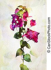 Watercolor Bougainvillea flowers