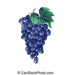 Watercolor bunch of blue grapes decorated with leaves