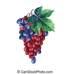 Watercolor bunch of red and blue grapes decorated with leaves