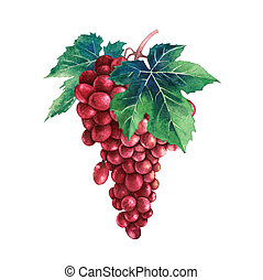 Watercolor bunch of red grapes decorated with leaves