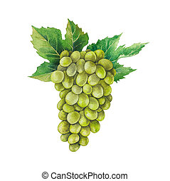 Watercolor bunch of white grapes decorated with leaves