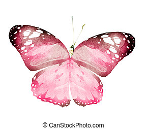 Watercolor butterfly , isolated on white background