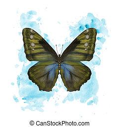 Watercolor butterfly Morpho Phanodemus on splattered background