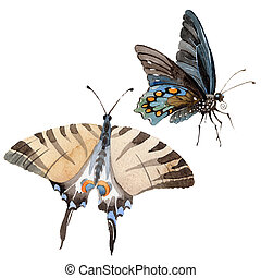 Watercolor butterfly tender insect, intresting moth, ...