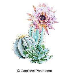 watercolor, cactus