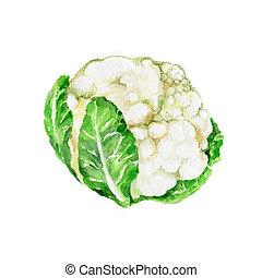 Cauliflower - Watercolor Cauliflower. Hand Drawn...