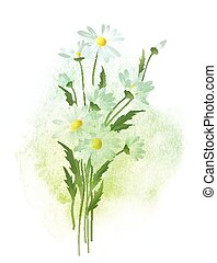 Watercolor chamomile flower. Vector illustration - ...