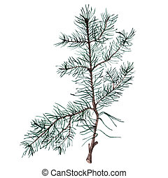 Watercolor Christmas tree branches.