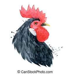 Watercolor cock rooster - Hand drawn watercolor illustration...