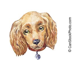 watercolor cocker spaniel dog