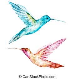 Watercolor colibri bird - Beautiful vector image with nice ...